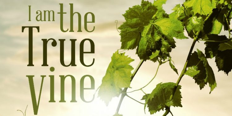 John 15 - The Vine and The Branches